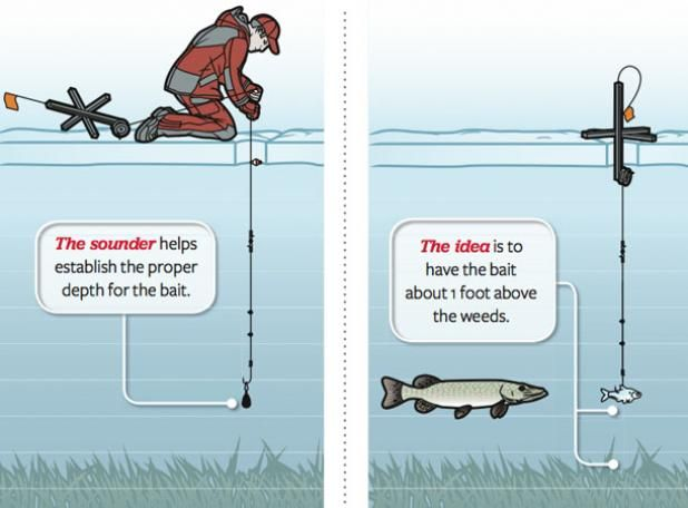"""Ice Fishing: Tactics for a Better Tip-Up suspend bait 12"""" above weeds where fish cruise for food"""