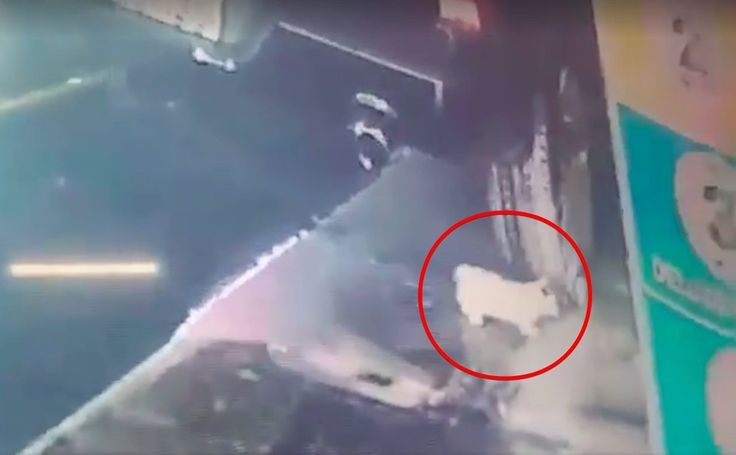 """Brave Man Saves Kitten That Falls Out Of Car During Car Wash http://viralabout.com/brave-man-saves-kitten-that-falls-out-of-car-during-car-wash/ A car wash employee spotted a kitten coming from a pile of suds, so he immediately took him to safety. But after he looked at the surveillance tape he was shocked. Credit: Naples Cat Alliance Naples Cat Alliance, received a call from Ultimate Express Car Wash about a kitten they had found. """"Where he"""