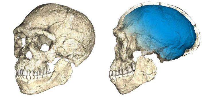 Reconstitution d'un crâne à partir de scans sur plusieurs fossiles originaux d'« Homo sapiens » trouvés sur le site marocain de Djebel Irhoud. En savoir plus sur http://www.lemonde.fr/paleontologie/article/2017/06/07/la-decouverte-qui-bouleverse-l-histoire-d-homo-sapiens_5140236_1650762.html#oZ3mvBwmTaABQWx6.99