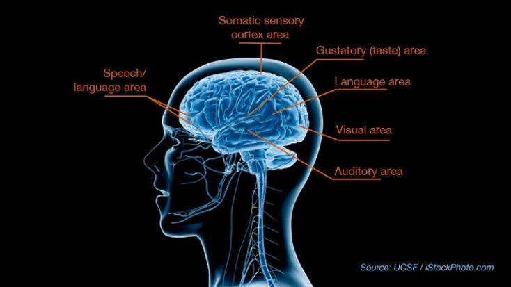 Breakthrough study reveals biological basis for sensory