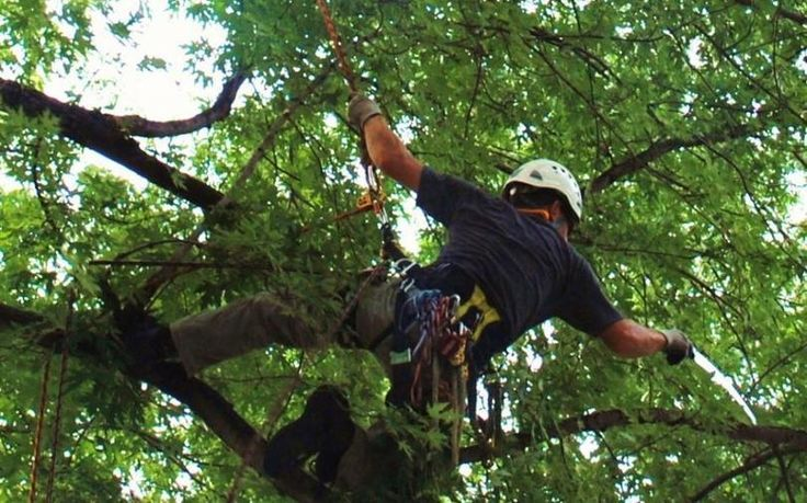 Importance of Tree Loppers for your tree's life