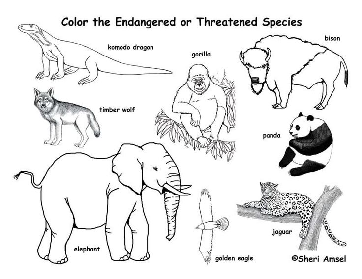 Free Download Endangered Animals Coloring Page Exploring Nature