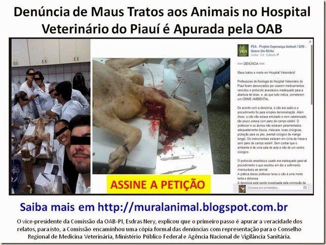 Mural Animal: Denúncia de Maus Tratos aos Animais no Hospital Ve...