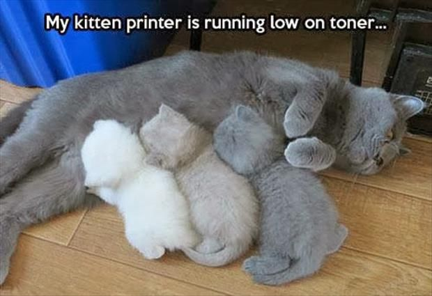 My kitten printer is running low on toner....