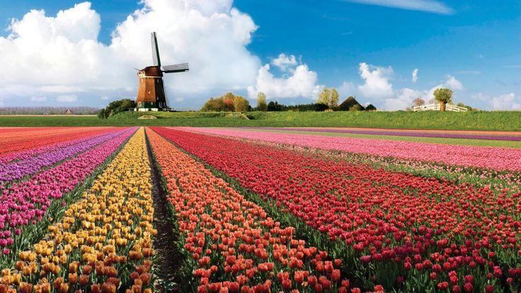 Keukenhof, Amsterdam-Hollanda