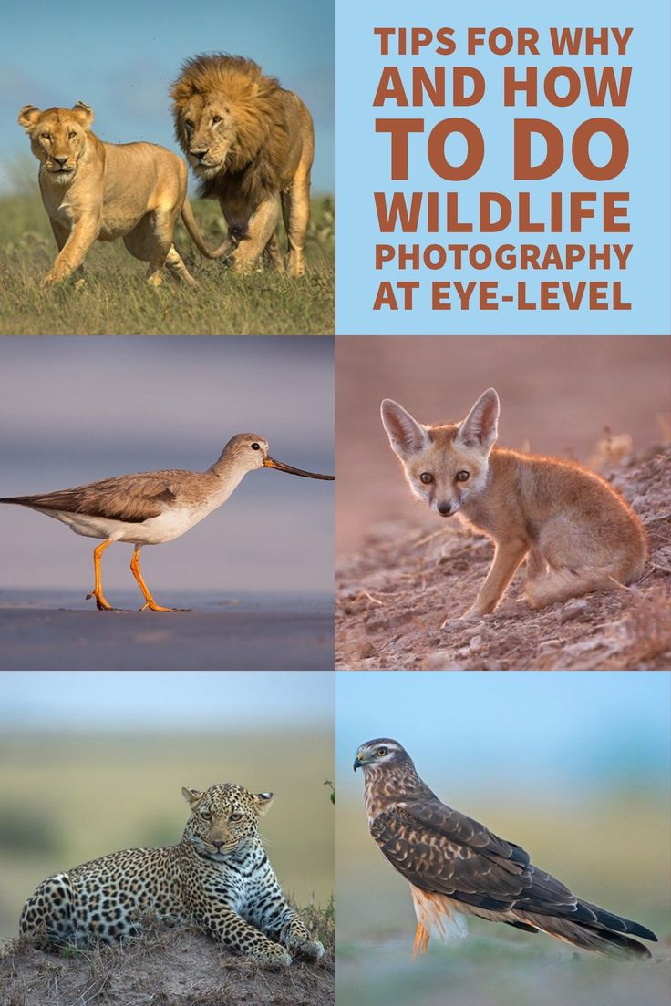 wildlife photography tips for beginners pdf