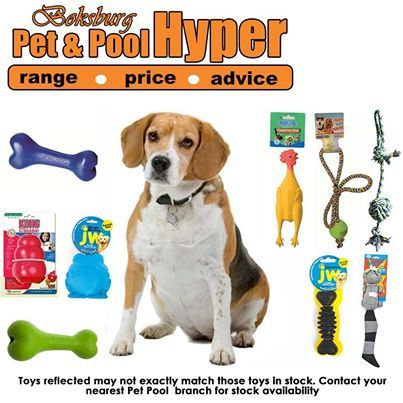 Spoil your dog with great assorted toys available from Pet & Pool Hyper Boksburg. Toys reflected may not exactly match those toys in stock. Contact your nearest Pet & Pool Hyper Boksburg for stock availability #lovedogs #doggytoys