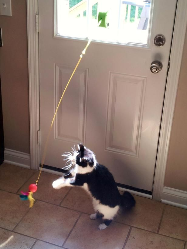 The Best Toys for Playful Cats and Dogs: No batteries needed for this environmentally friendly toy. Just place it in direct sunlight and watch it spring into action. This will keep your cat entertained for hours. Photo courtesy of  Solar Chases From DIYnetwork.com