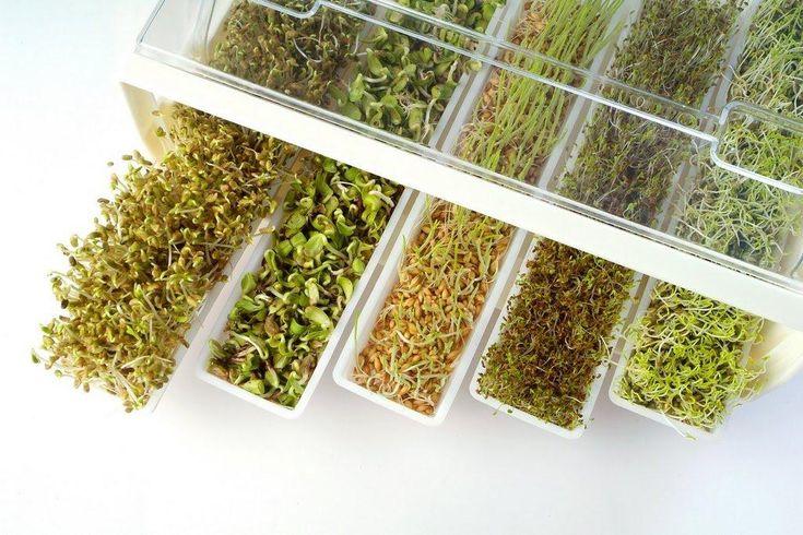 Para preparar germinados en casa necesitas: 1 frasco conservero de vidrio de un litro. 3 cucharadas de legumbres, granos o semillas a elección, que no ...