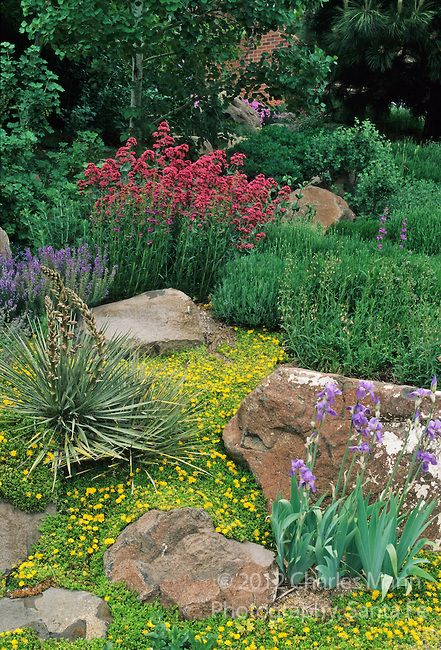 925 best images about southern california landscaping on for Mountain landscape design