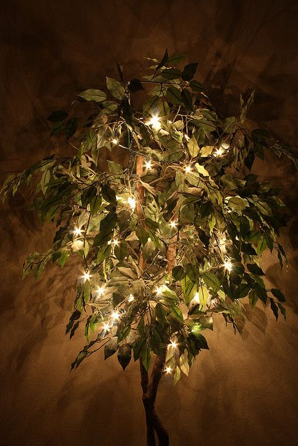 Lighted Ficus Trees La D 233 Pendance Du Ficus Pinterest
