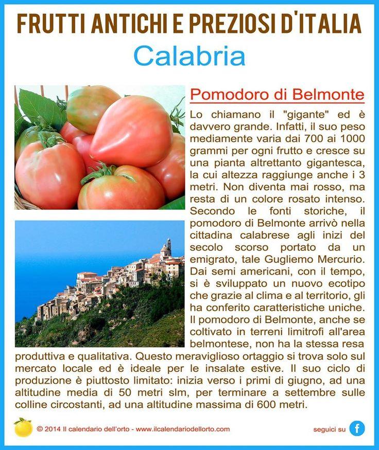 Calabria: Pomodoro Belmonte