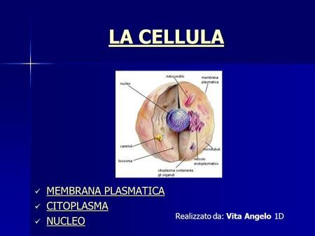 LA CELLULA MEMBRANA PLASMATICA CITOPLASMA NUCLEO>