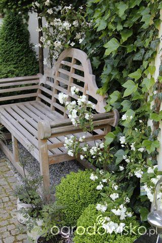 Ogród nie tylko bukszpanowy - część III - strona 606 - Forum ogrodnicze - Ogrodowisko