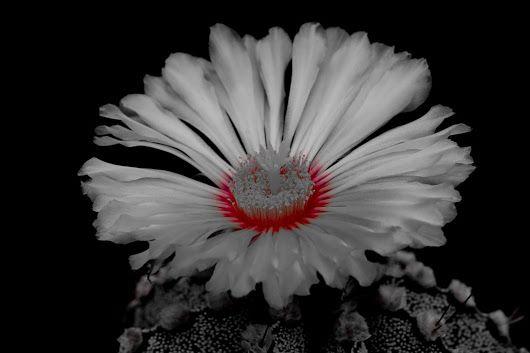Kaktusblüte #kaktus #kaktusblüte #cactus