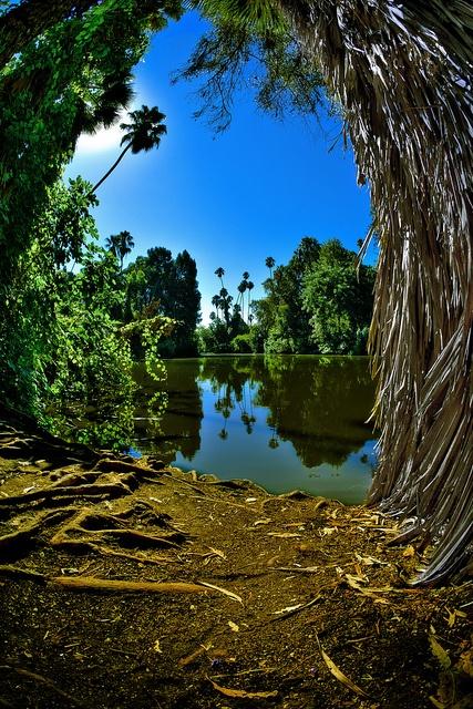The Baldwin Lake. A part of the LA Arboretum in Arcadia, California.  Photo by David Wu, Orispace on Flickr.