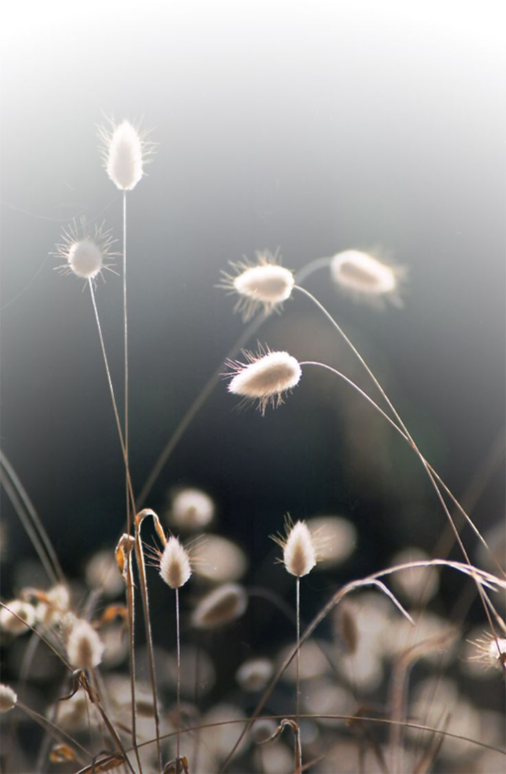 So delicate and beautiful//