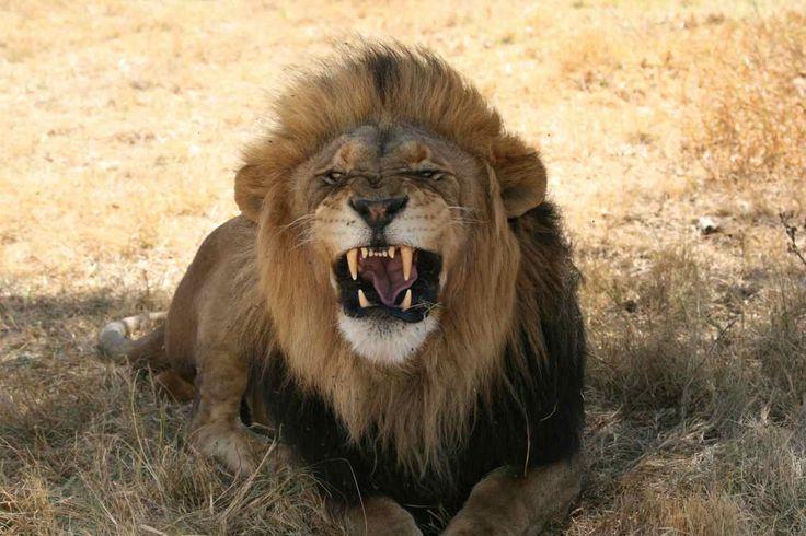 Afryka dzika / Wild, Wild Africa