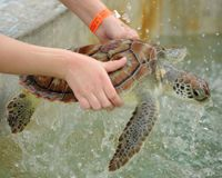 Stop Farming Endangered Turtles for Meat! ~ http://www.thepetitionsite.com/takeaction/115/772/107/
