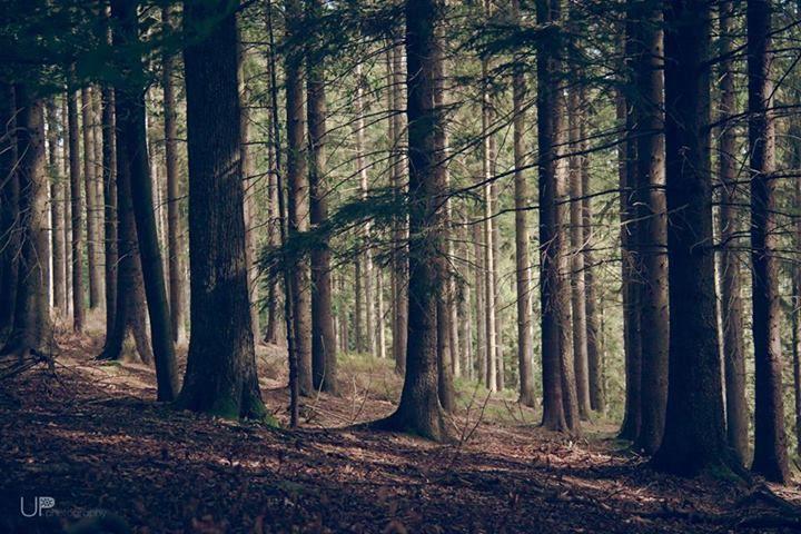 Forest in Eupen, Belgium