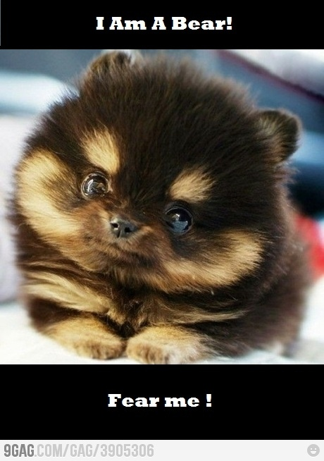 You dare to mess with me?Cutest Puppy, Teacups Pomeranians, Cutest Dogs, Teddy Bears, Chipmunks, Cutest Puppies, Fluffy Puppies, Eye, Animal