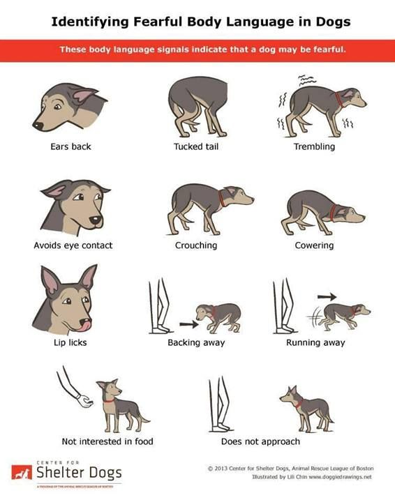 Read a dogs body language
