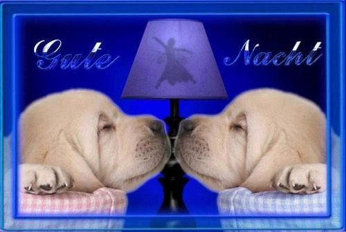 ich wünsche euch noch einen schönen abend und später eine gute nacht  - http://www.1pic4u.com/1pic4u/guten-abend-bilder/ich-wuensche-euch-noch-einen-schoenen-abend-und-spaeter-eine-gute-nacht-41/