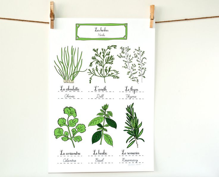 Herbs - French Kitchen Art Poster - Green Home Decor for a gourmet Aromatics Culinary 13x19 art print Basil cilantro rosemary