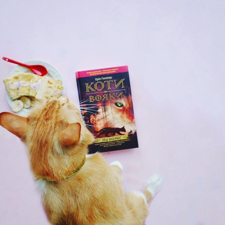 #book #книга #книголюб #cute #котик #mimi #кот #kitten #animal #funnycat #котенок #pets #cute #catsgram #catofinstagram #instacat #animalgram #petsgram #киев #ua #meow #cats #книга #food #foodporn