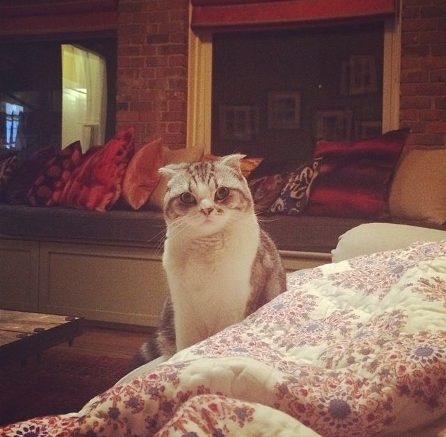 29 best Olivia and Meredith images on Pinterest | Taylor ...