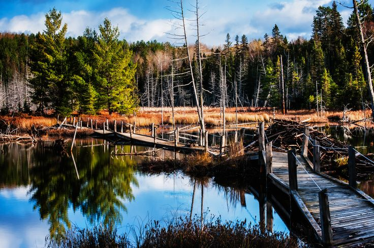 The Beaver Pond. Temagami, Northern Ontario, Canada.