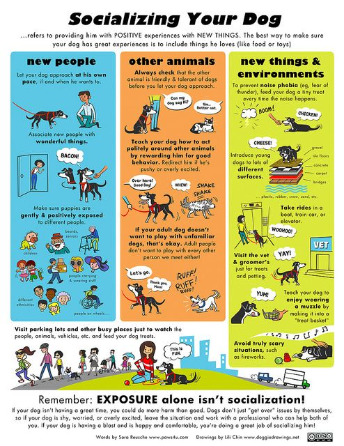 Socializing Your Dog - Provide him with positive experiences and reinforcement with new things. #Canine #Pets #Animals #Training #Tips #Infographic by Lili Chin