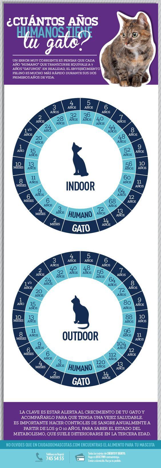 Conocer la edad de tu gato te sirve para responder a las necesidades que tiene en cada una de las etapas de su vida.: