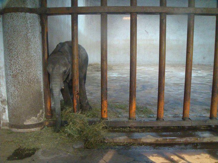 Elephant poaching essay