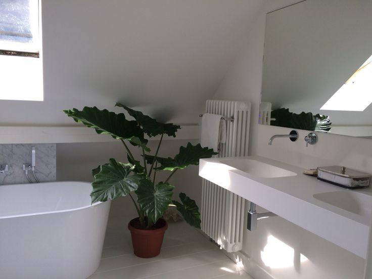 Plants#greens#plant in badkamer#