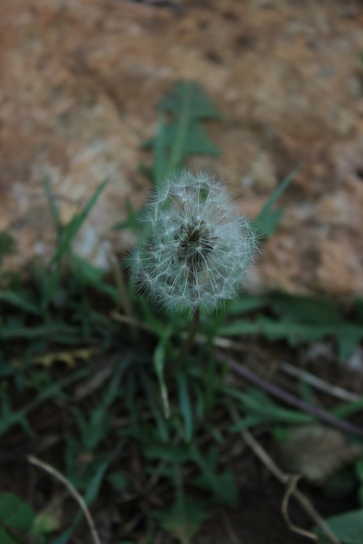 Vanilla&Staubzucker: Summer memories - Ricordi dell'estate - Sjećanja na ljeto