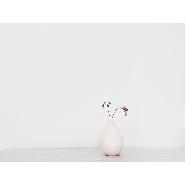 so soft sunday  #anneblack #instaflower #softminimalism