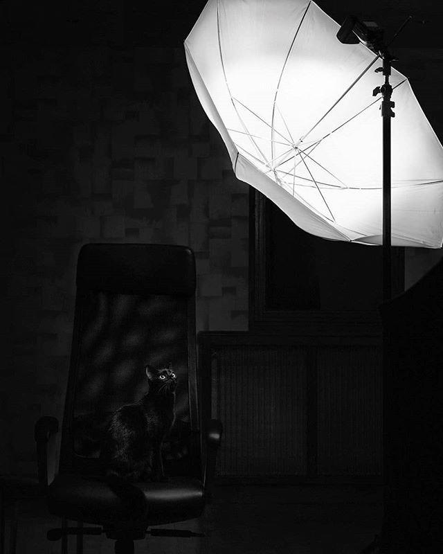 What's that bright thing? #cat #photography #pierrepichot #fineart #print #monochrome #lowkey #portrait #studio #blackandwhite #blackcat #bnw_rose #bnw_demand #silvermag #friendsinBnW #catsofinstagram #bnw_society #sombrebw #curatethis1x #bnw_europe #agameoftones #instamood #photostudio #bw_perfect #bw_lover #catstagram #curiosity