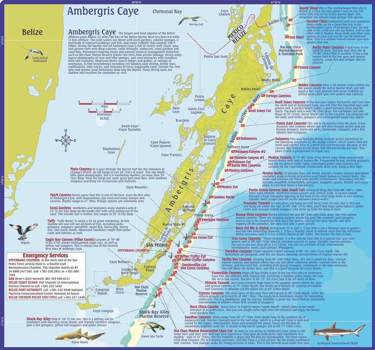 Dive Belize, Map and Info on Dive and Snorkeling Sites off Ambergris Caye, Belize