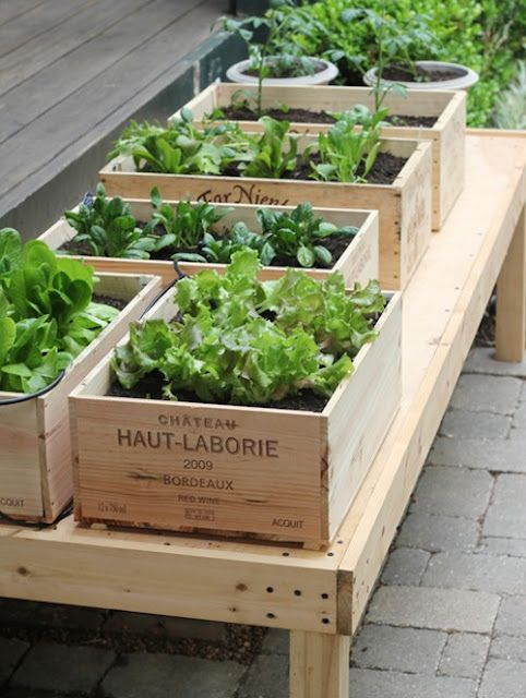 Mini jardin aromatique dans caisse de vin.