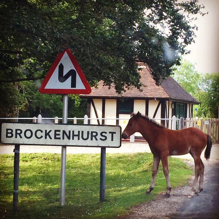Enjoying Brockenhurst!