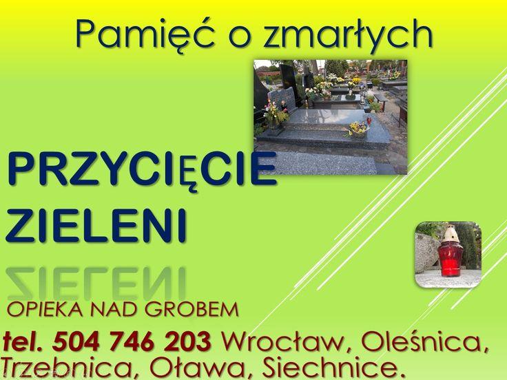 Przycięcie tui na przy grobie. Wrocław , Cmentarz Osobowicki, Grabiszyński, na KIełczowie, Jerzmanów, Psie Pole, kiełczowska, cennik  tel 504-746-203 , http://posprzataniegrobow.eu/