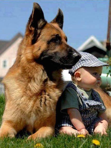 #shepped #germanshepherd #gsd www.shepped.com