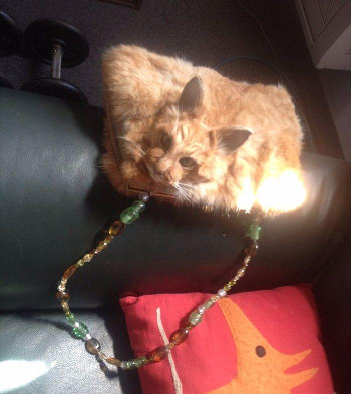 Açılış fiyatı bin 400 dolardan başlayan 'kedi çanta'lar, Yeni Zelanda'da bir açık artırma sitesinde satışa sunuldu. Postu doldurulan hayvanlarla yapılan çantalara tepki yağdı… Detaylar ajanimo.com'da.. #ajanimo #ajanbrian #hayvan #animal #hayvanhakları