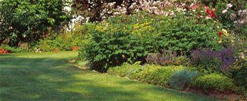 Çimlere Özel Bölüm 2 - Bahçecilik İpuçlari, Çim Bakimi