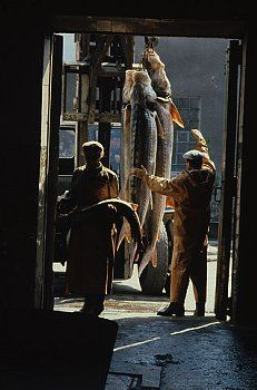 Vilkovo village, situated on the Danube delta, is often referred to as the Venice of the Ukraine. Due to its proximity to Chernobyl, authorities have banned the consumption of fish from the river, due to the high radiation levels. Employees process the fish for use as animal feed. | Location: Vilkovo, Ukraine. 1992