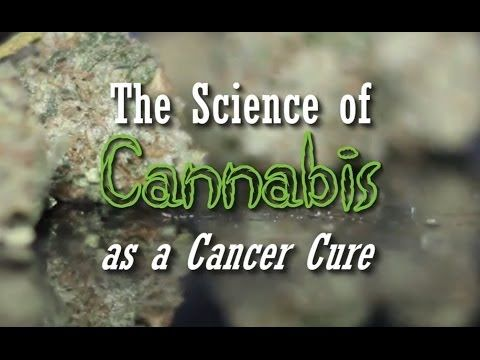 The Science of Cannabis as a Cancer Cure (Documentary) - https://www.youtube.com/watch?v=xh3try8n878