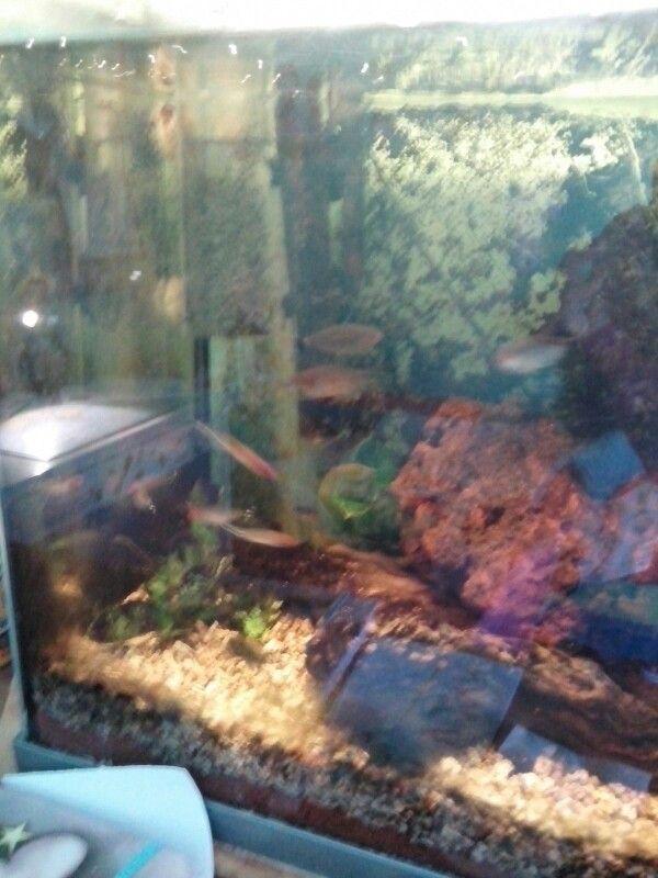 Meus peixinhos !!!
