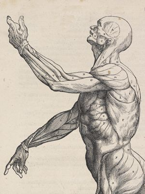outdated anatomy prints are so cool