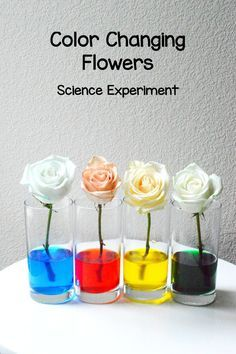 color changing flowers experiment